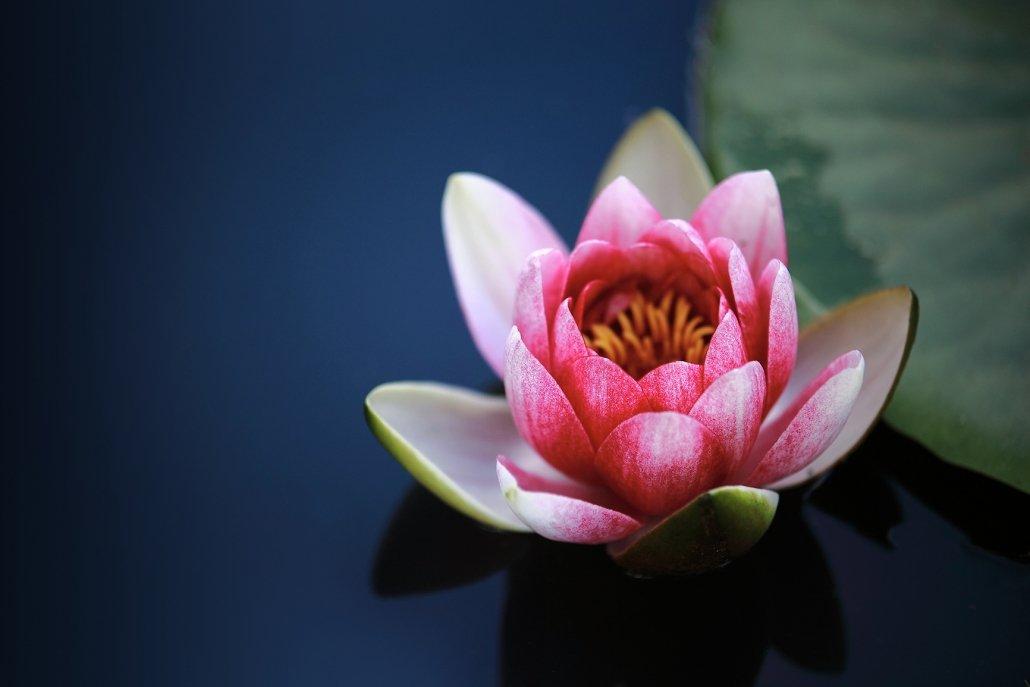 Essenze femminili per diffusori lily