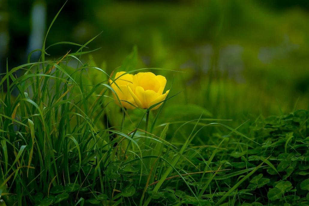 essenze per diffusori fiori di campo