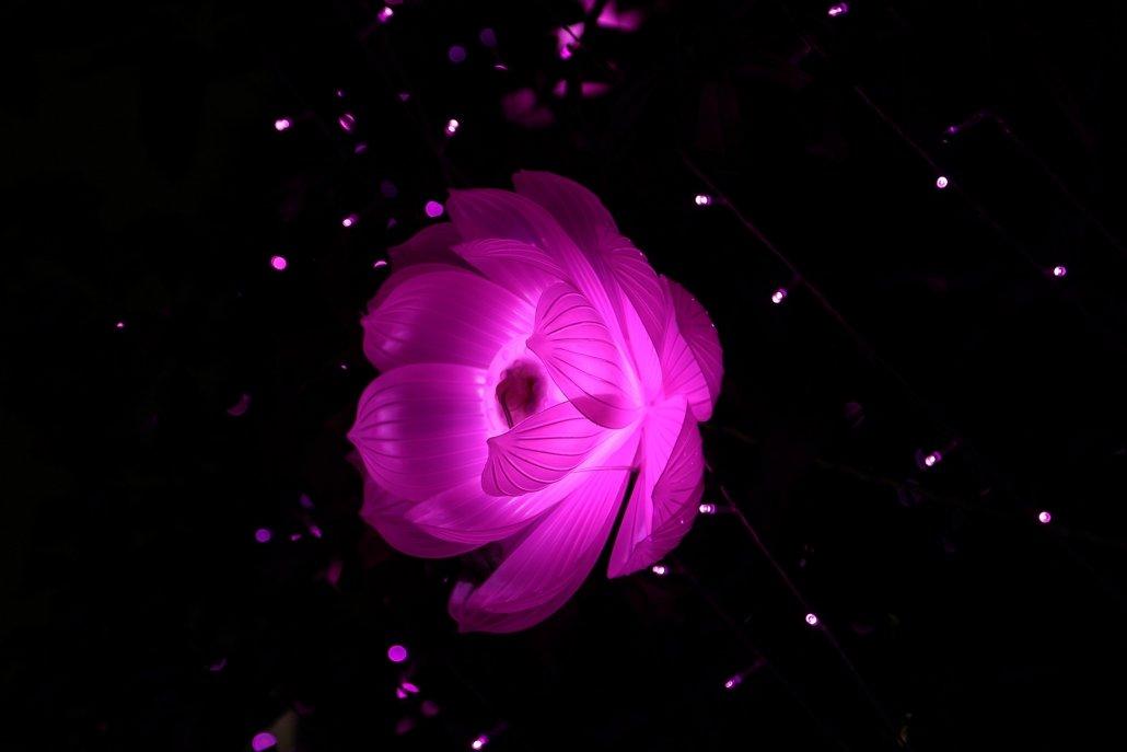 essenze per diffusori fiori di luce
