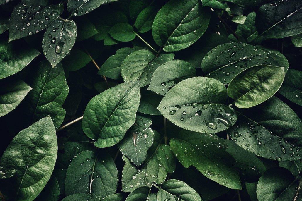 essenze per diffusori fiori foglie d'oriente