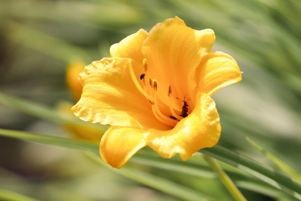 essenze per diffusori fiori fresia