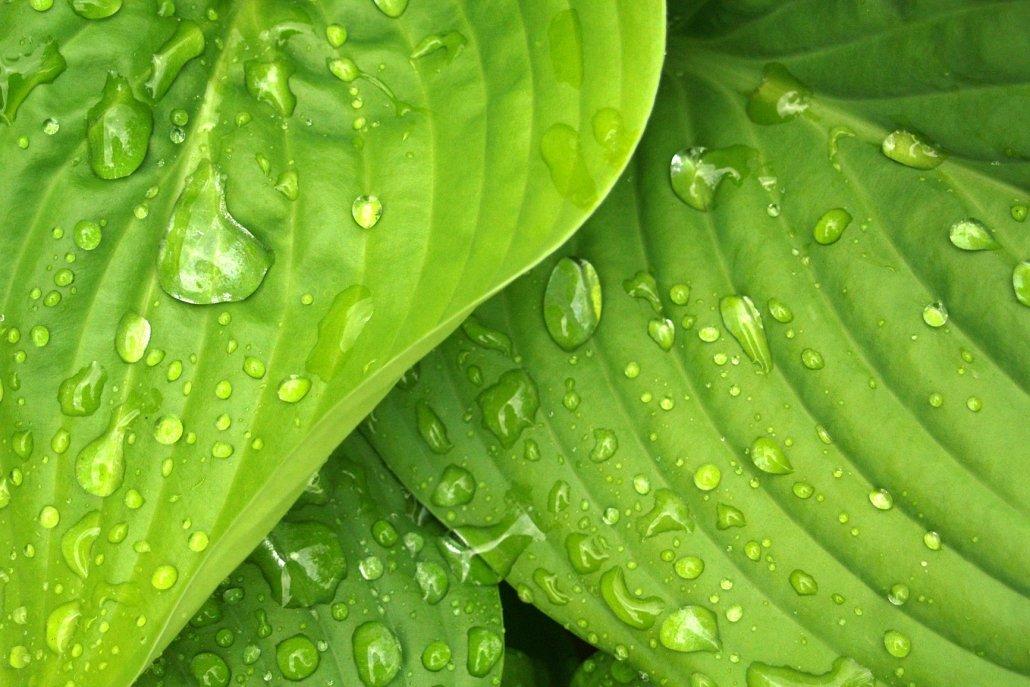 essenze per diffusori fiori green