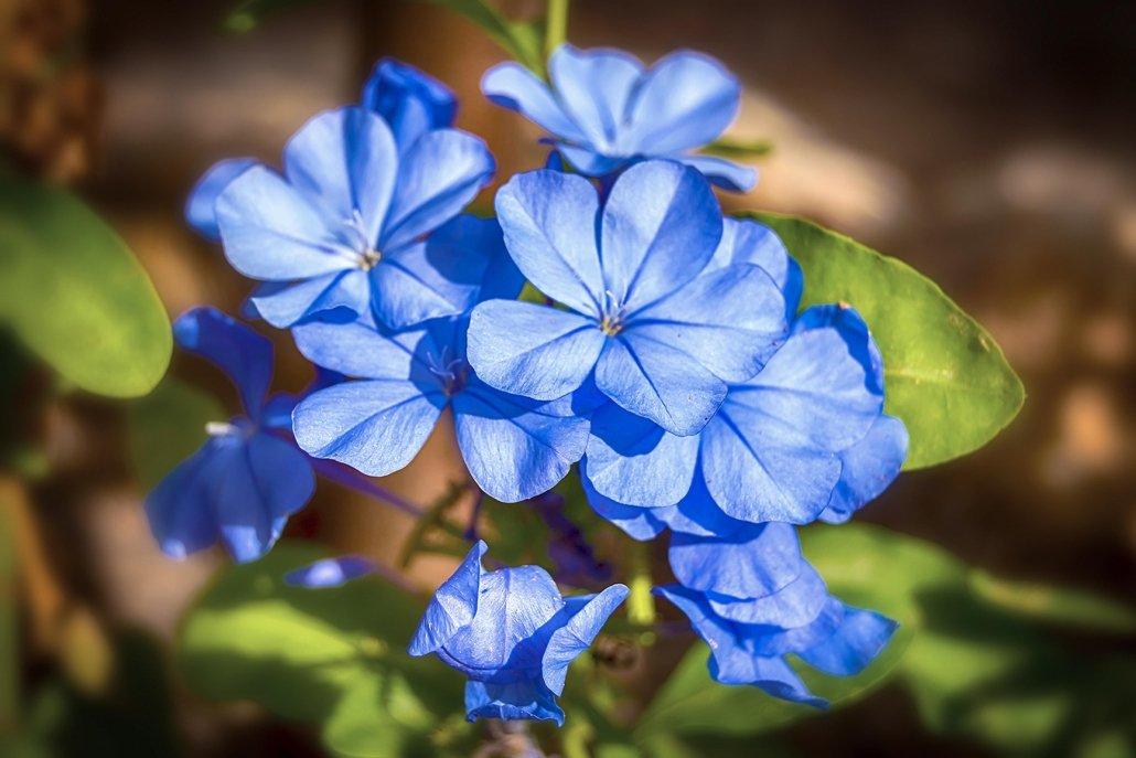 essenze per diffusori fiori jasmine ethere