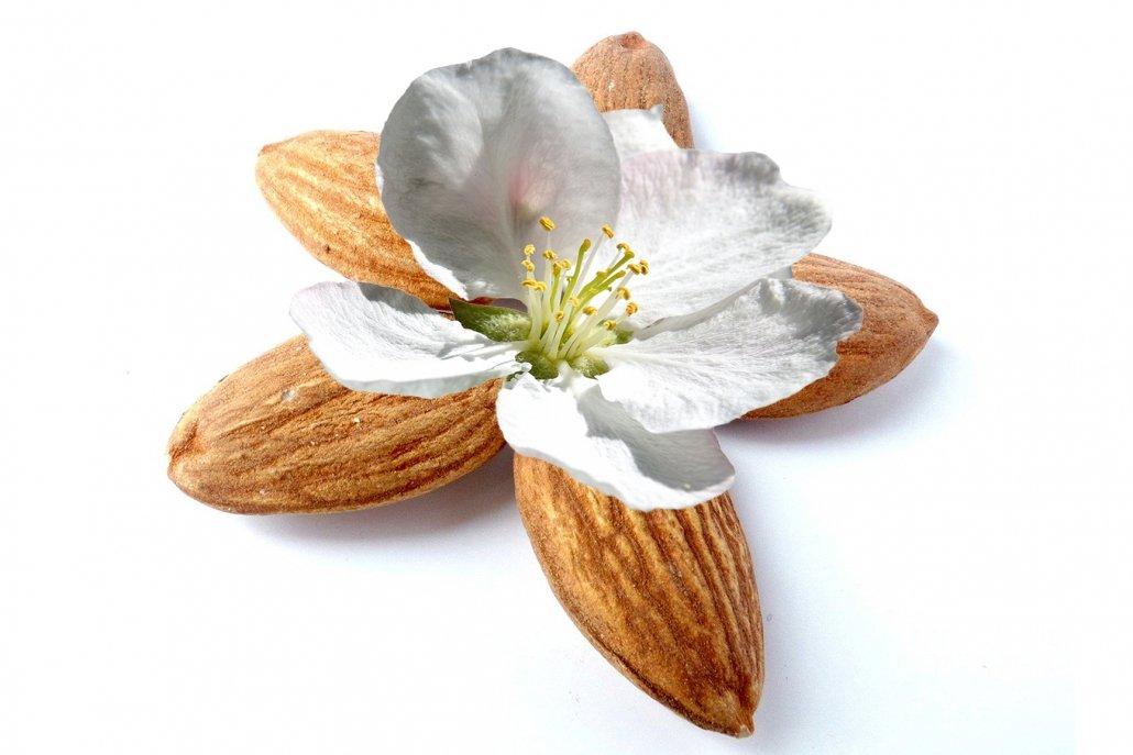 essenze per diffusori fiori mandorli in fiore