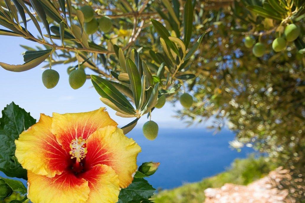 essenze per diffusori fiori olive ed ibiscus