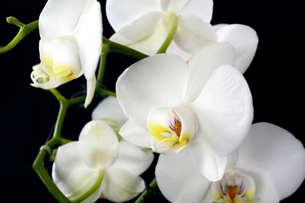 essenze per diffusori fiori orchidea