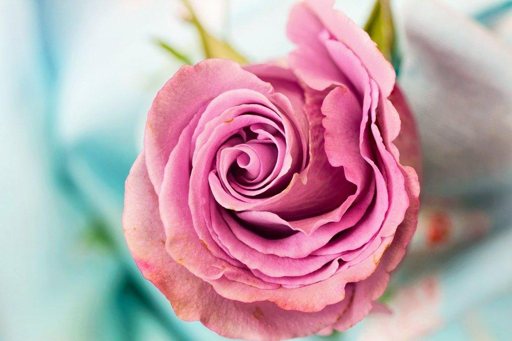 essenze per diffusori fiori pink