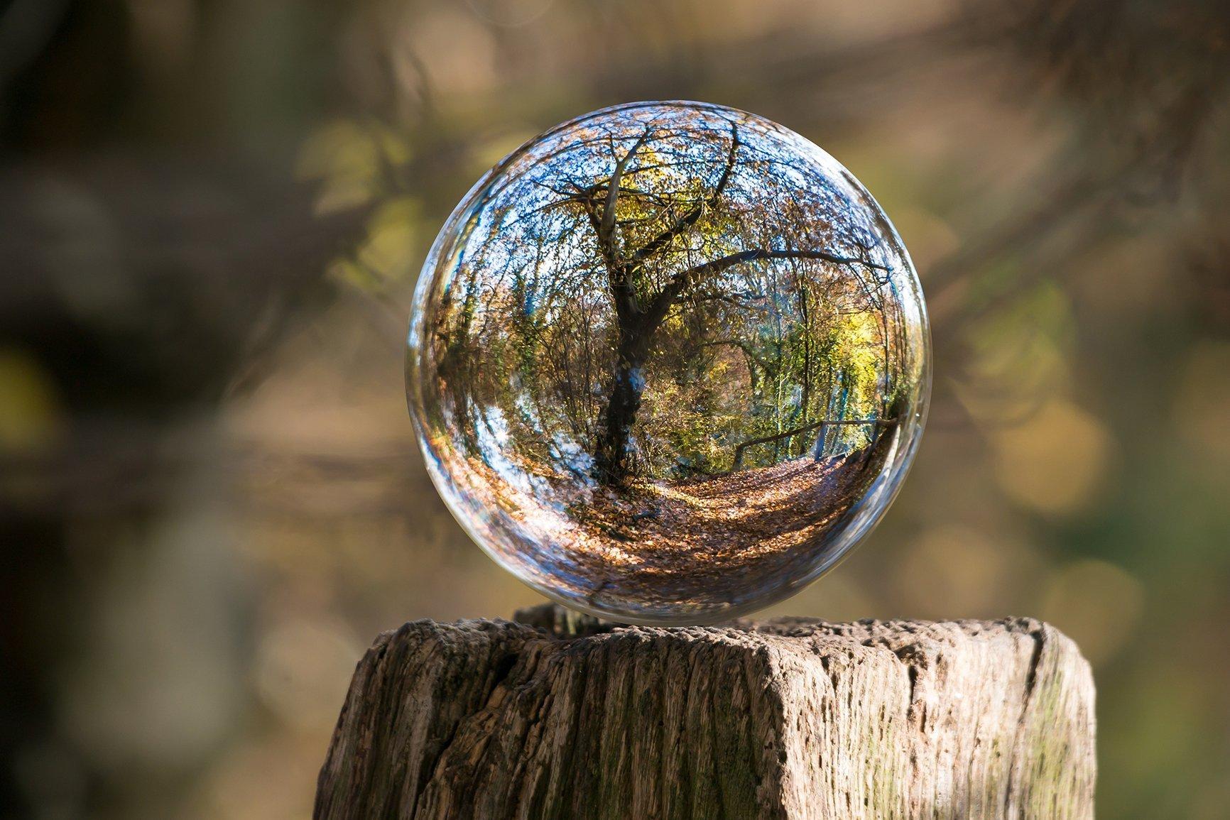 profumi naturali aroma legno e foresta