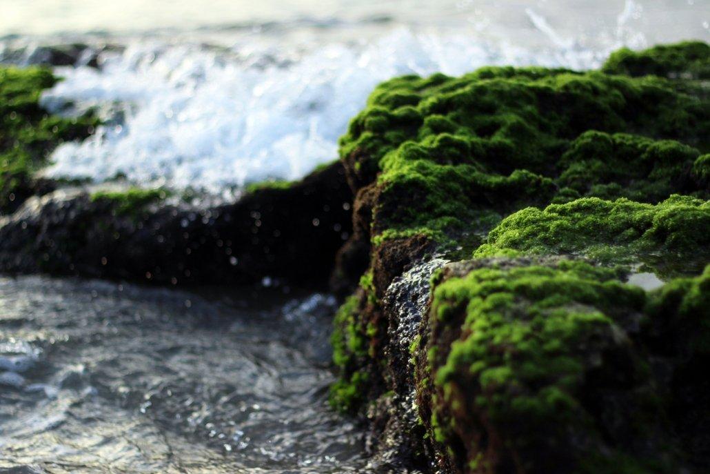 Essenze marine per diffusori Acqua