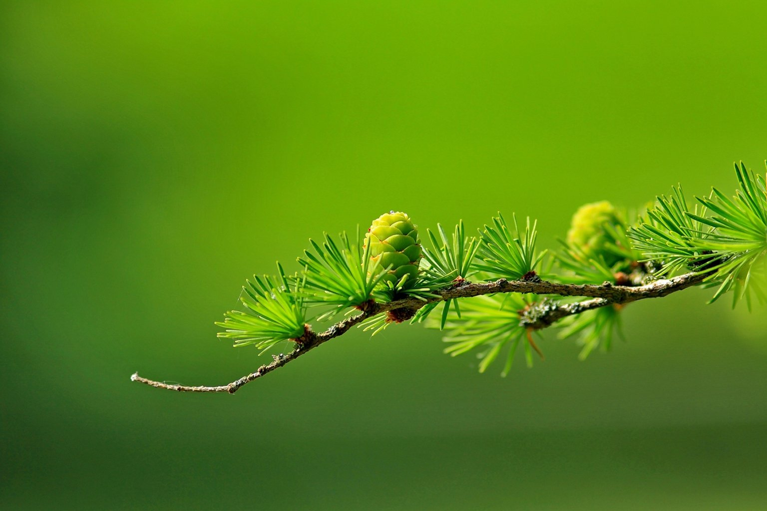 oli essenziali per diffusori fragranze natura