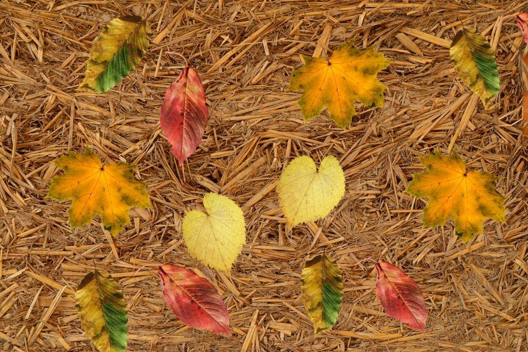 Essenze per diffusori stagioni autunno