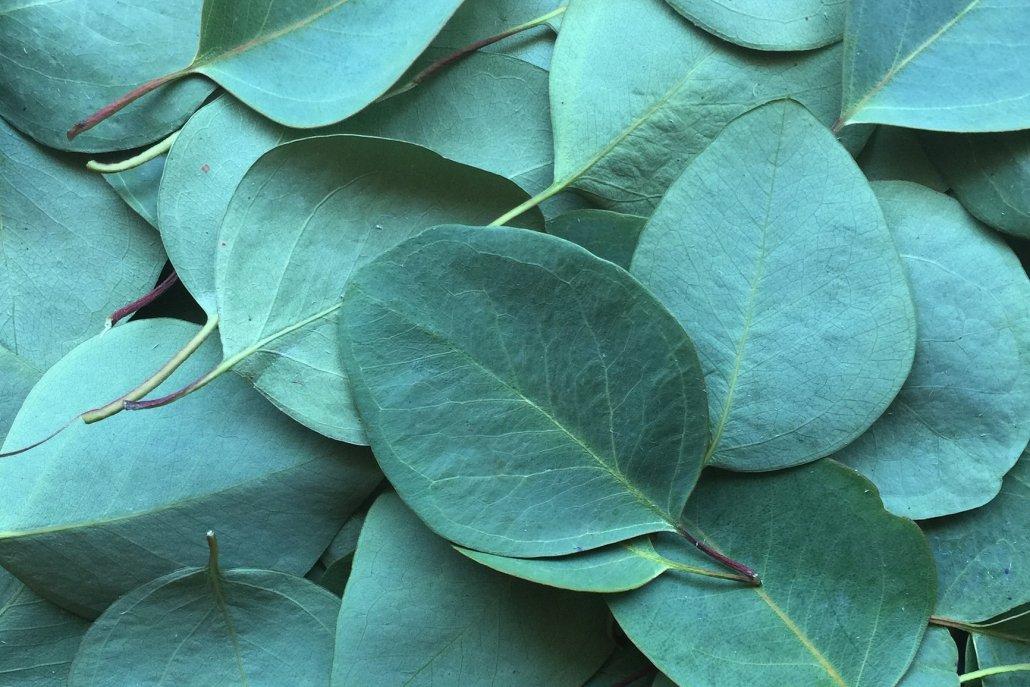 Oli essenziali per diffusori eucalipto