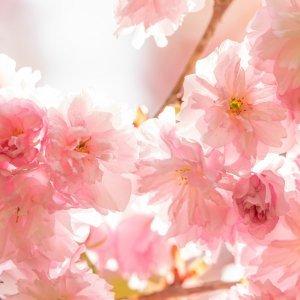 Fragranze ambiente fiori di luce