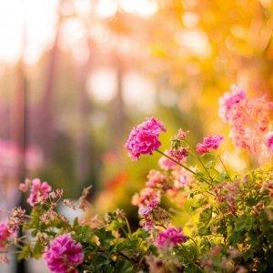 essenze per diffusori giardino proibito