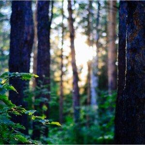 essenze per diffusori linfa dei boschi