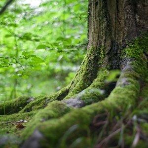 Fragranze natura linfa dei boschi