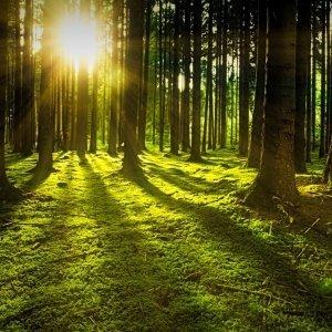Forest fragranza natura