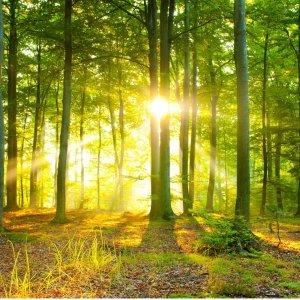 Fragranze ambiente Forest