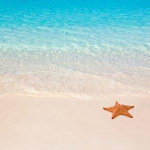 Fragranze marine summer feeling
