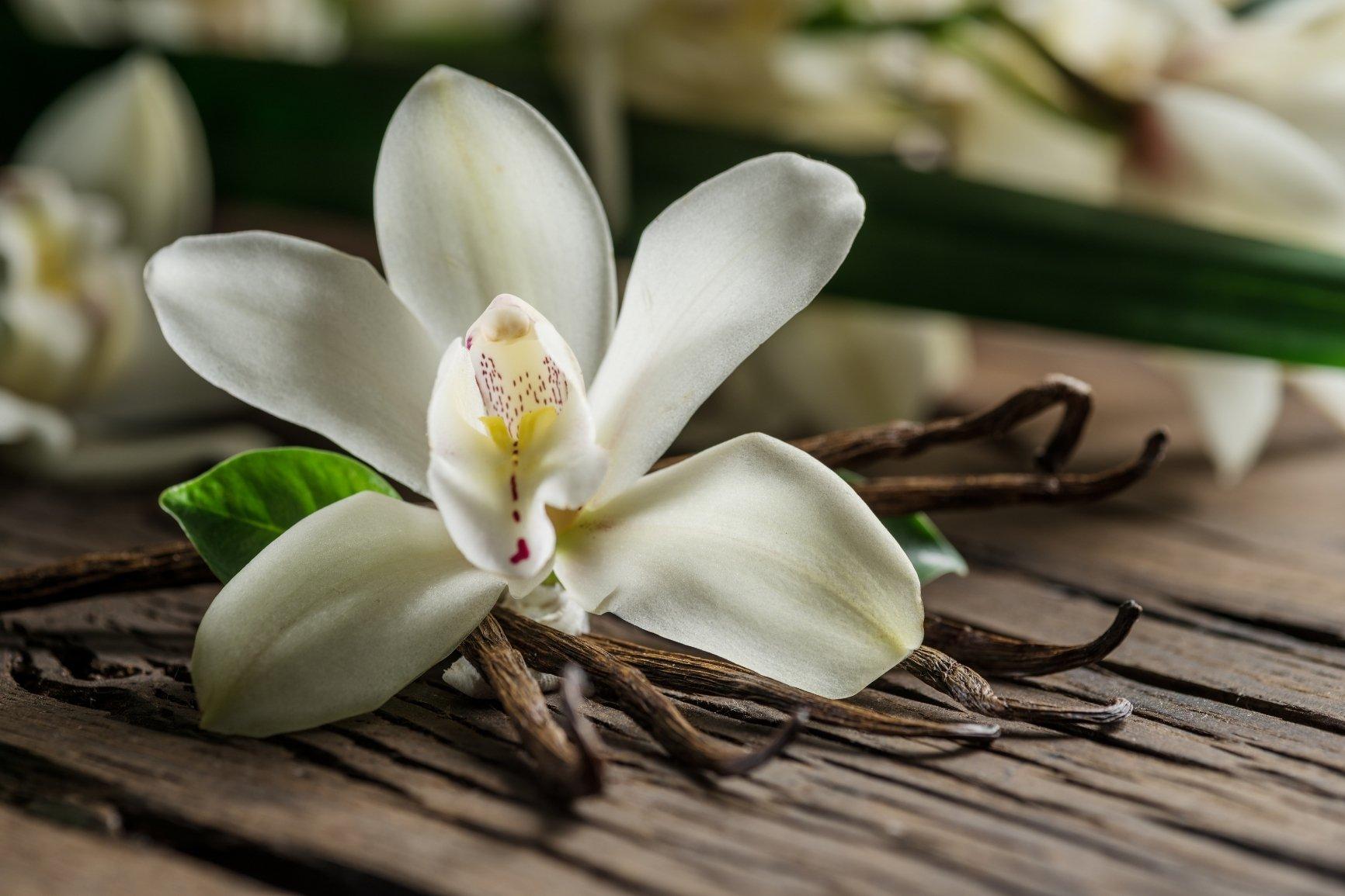 Fragranze fiori vanilla kisses