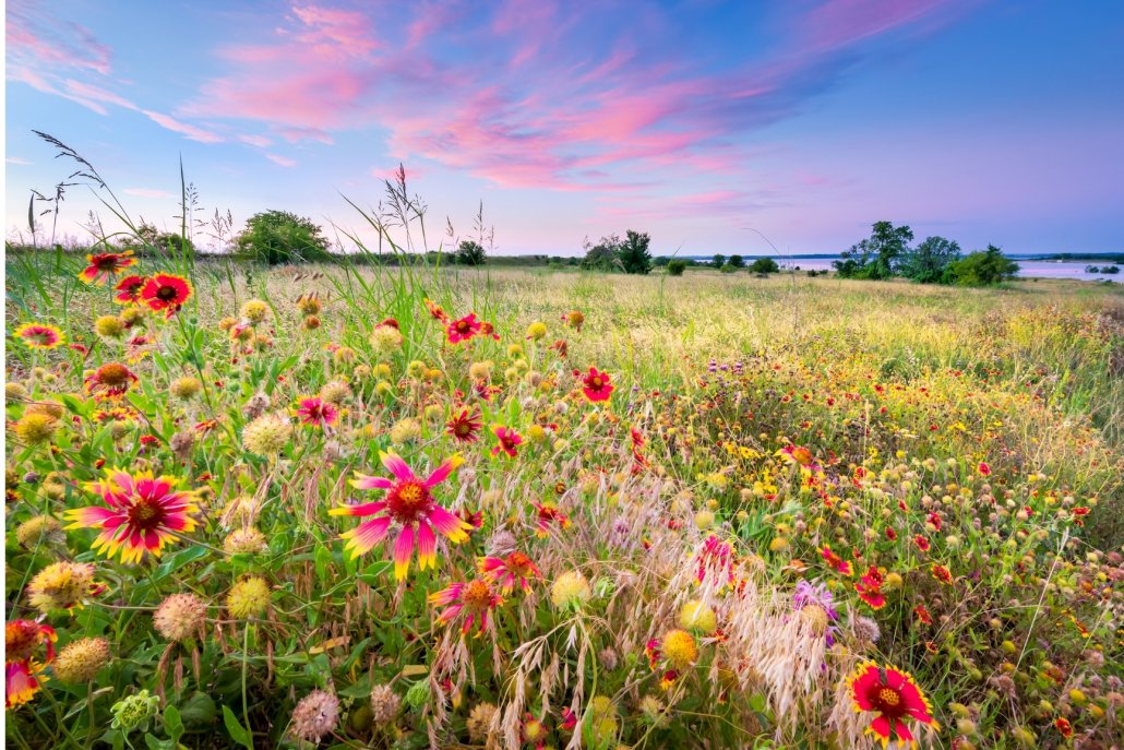 essenze per diffusore fiori Fiori di campo