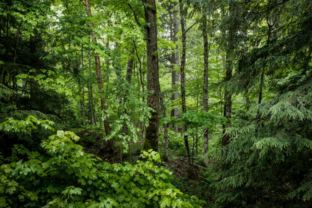 Essenze per diffusori legni foresta