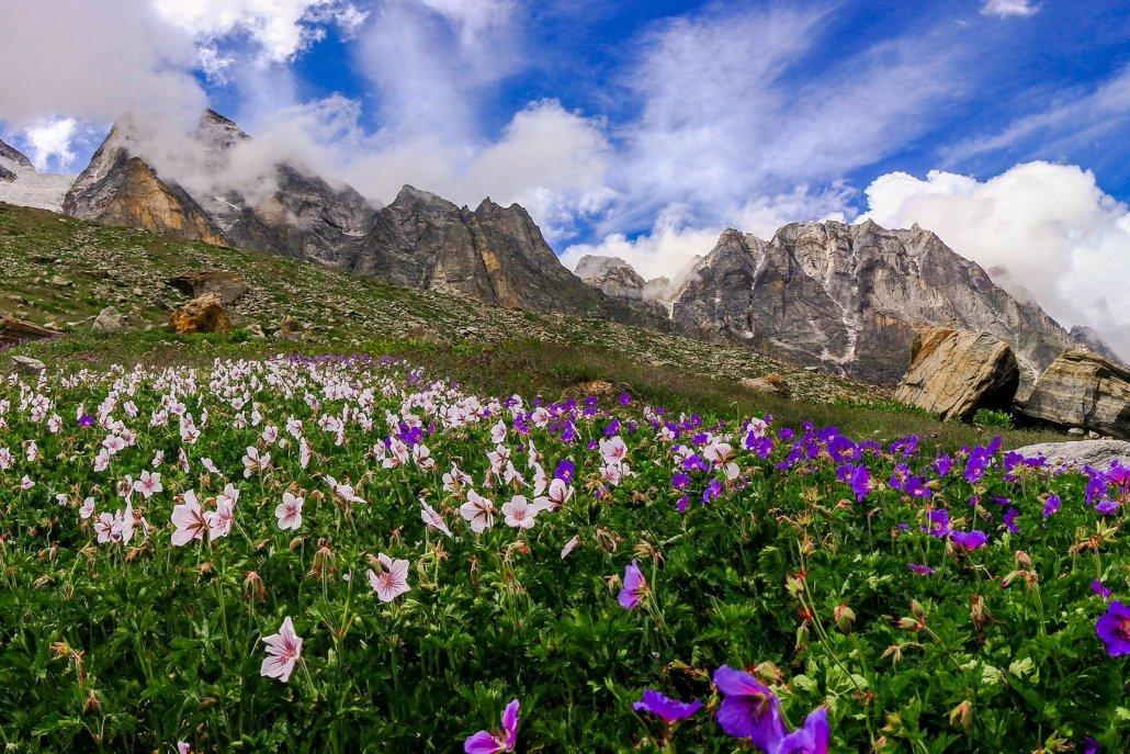 Essenze speciali per diffusori blooming valley