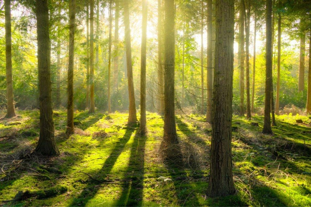 Essenze per diffusori legno linfa dei boschi