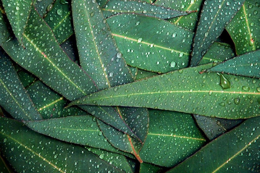 Essenze per diffusori legno pino mugo