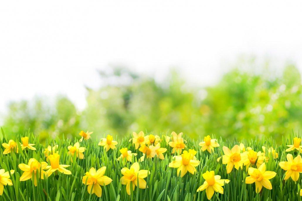 Essenze per diffusori stagioni primavera